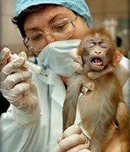 animal experiment - monkey and human 3