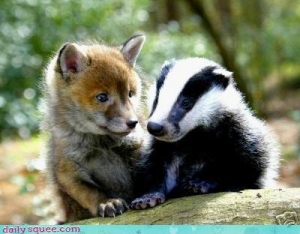 fox cub and badger cub