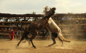 horse fighting petition