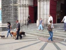 St R Dog Blessing 3