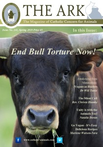 Ark Front Cover 241
